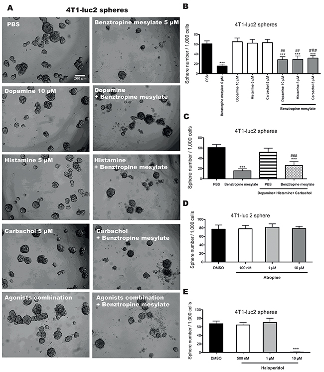 Benztropine mesylate partially impairs mammosphere formation of breast CSCs through acetylcholine receptors, dopamine receptors/transporters and histamine receptors.