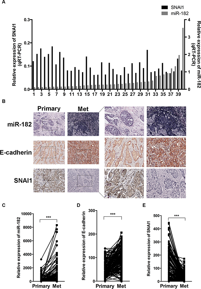 Correlation of miR-182 and SNAI1 expression with metastatic colonization.