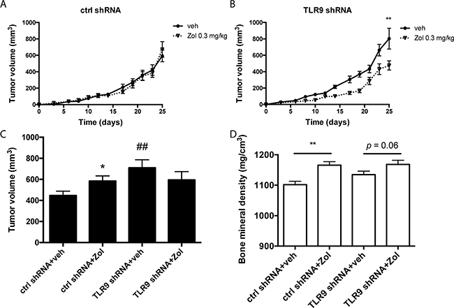 Zoledronate inhibits the growth of MDA-MB-231 TLR9 shRNA cells but not control shRNA cells in vivo.