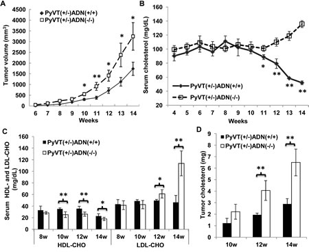 Adiponectin deficiency accelerated breast cancer development and increased serum as well as tumor cholesterol levels in MMTV-PyVT mice.