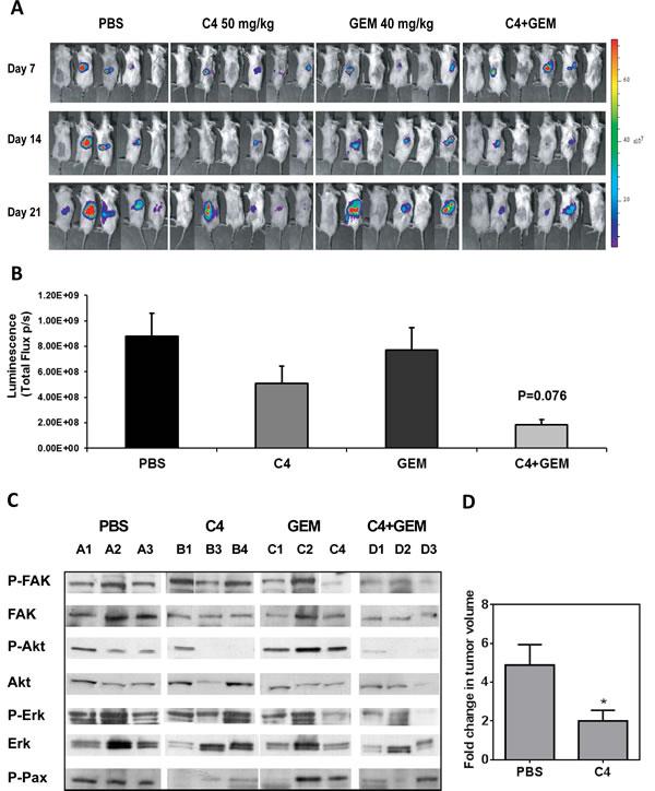 C4 reduced tumor growth