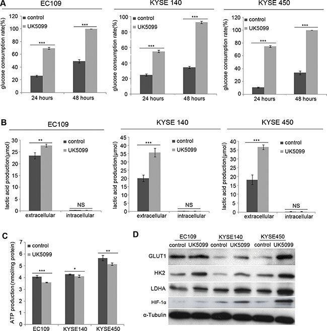 UK5099 treated cells show increased aerobic glycolysis.