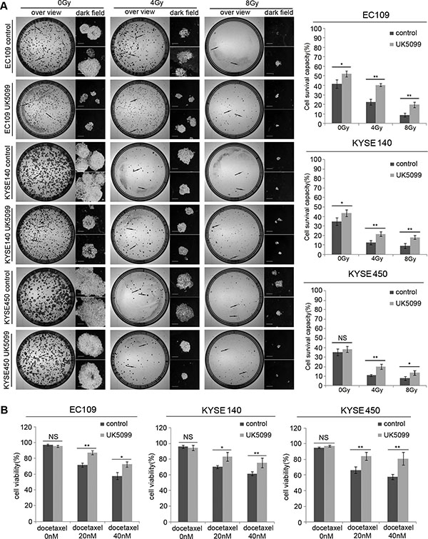 The application of UK5099 application induces therapy resistance in the esophageal squamous cancer cells.