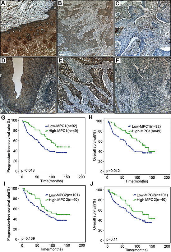 Immunohistochemical assay and survival analyses.