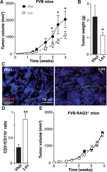 Lovastatin inhibits N202.1A tumor growth in immunocompetent but not in immunodeficient mice.