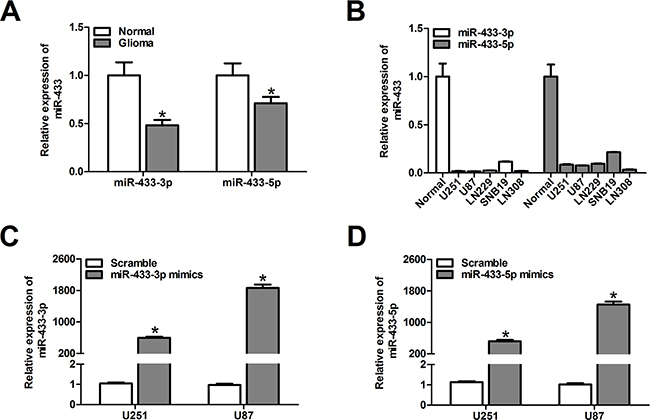 MiR-433-3p and miR-433-5p are down-regulated in malignant glioma.