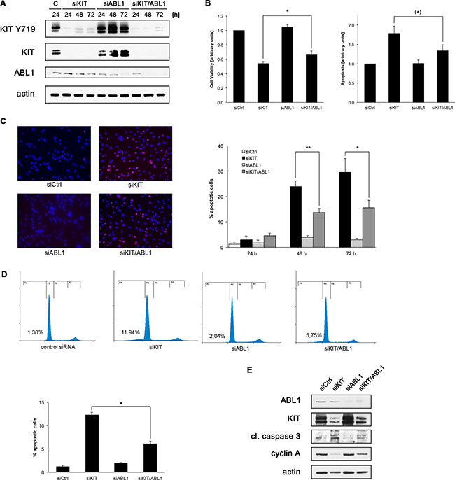 Co-depletion of KIT and ABL1 attenuates the effects of KIT knock-down.
