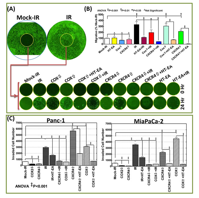 RT-associated activation of CXCR4 and COX-2 determined the metastatic state of the surviving PC cells: