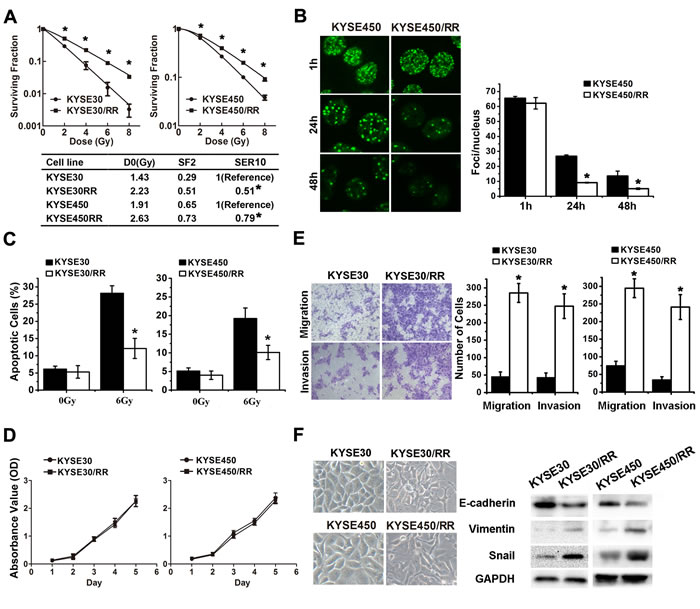 ESCC/RR cells are radiation resistant and possess an aggressive phenotype.
