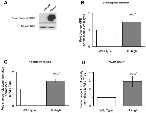 Forced TF overexpression increases breast cancer stem cell activity.