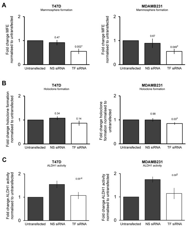 Transient TF knockdown reduces breast cancer stem cell activity.