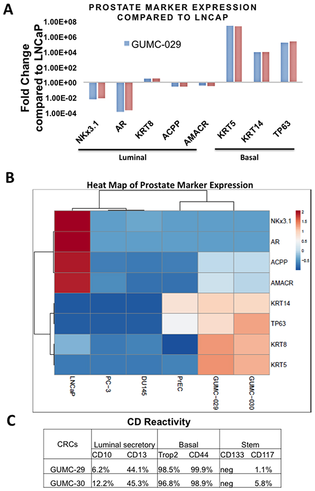 Characterization of prostate epithelial cells markers using qRT-PCR and Flow Cytometry.
