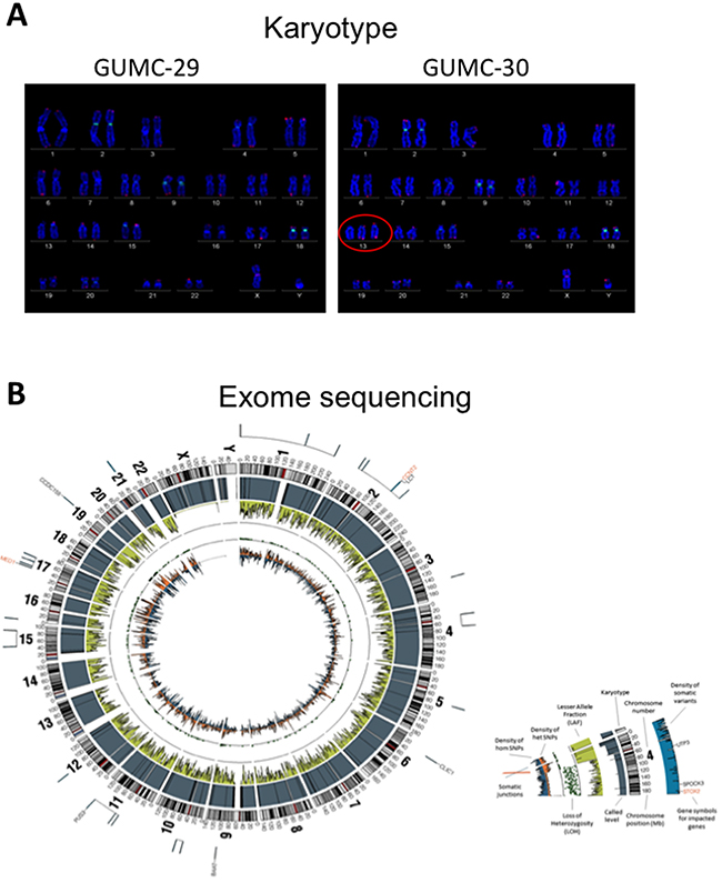 Karyotype and exome sequence analysis of the prostate CR cells.