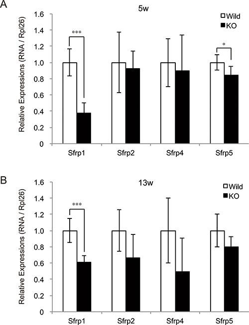 Decreased expression of SFRP family genes in myostatin-deficient skeletal muscle.