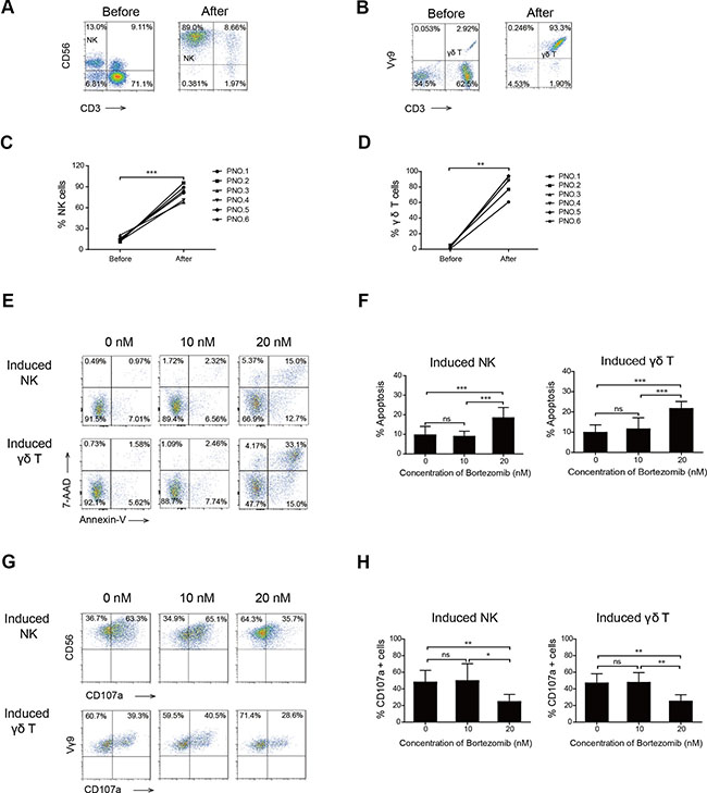 Effects of high- and low-dose bortezomib on the viability and degranulation of induced NK and γδ T cells.