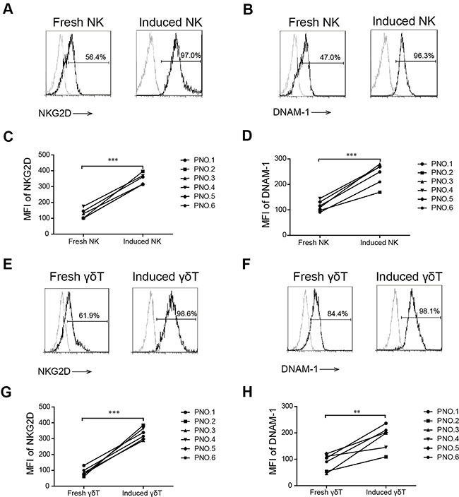 NKG2D and DNAM-1 expression in induced and fresh NK and γδ T cells.