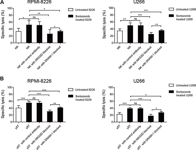 Enhanced NK and γδ T cell cytotoxicity against low-dose bortezomib-treated MM cells correlated with the interactions between NKG2D and DNAM-1 receptors and their ligands.
