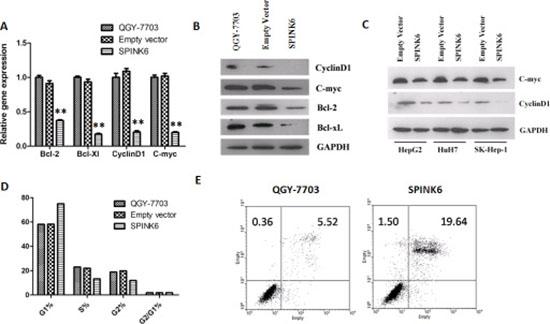 SPINK6 expression downregulates ERK1/2 downstream factors.