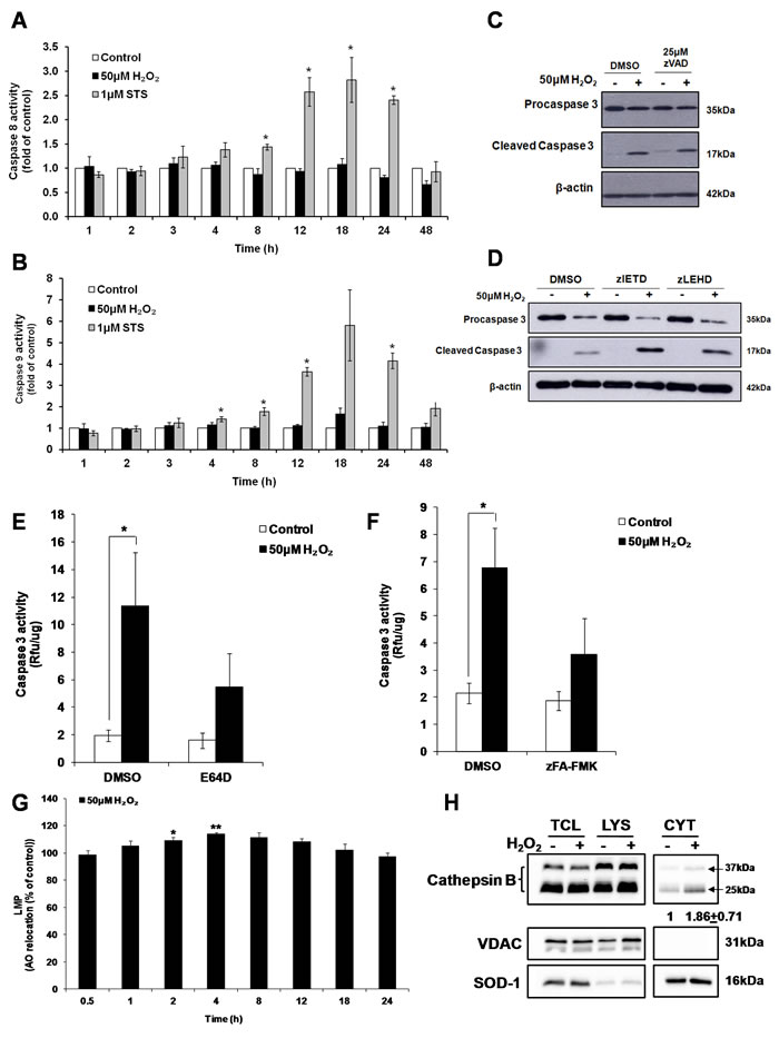 Cathepsin(s) induces the activation of caspase 3 by sub-lethal oxidative stress.