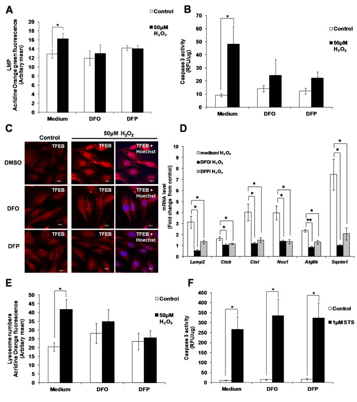 Activation of caspase 3 and lysosome biogenesis induced by subtoxic oxidative stress involves iron.