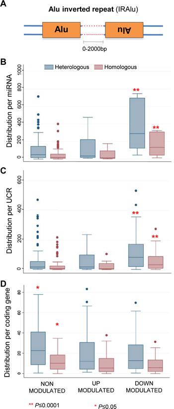 Inverted Alu repeats (IRAlus) distribution around miRNAs, UCRs and coding genes.