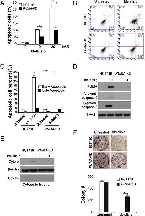 PUMA mediates the anticancer effects of idelalisib through the mitochondrial pathway.
