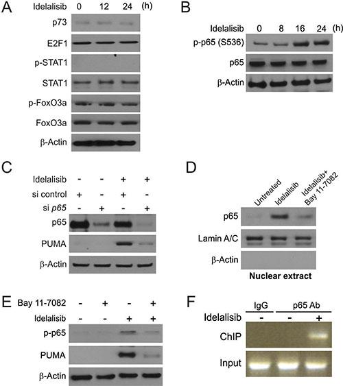 p65 mediates idelalisib induced PUMA induction.