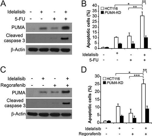 Idelalisib synergizes with 5-FU or regorafenib to induce apoptosis via PUMA in colon cancer cells.
