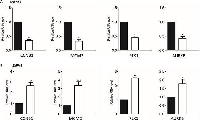 Validate the representative cell cycle genes regulated by PRKAR2B in castration-resistant prostate cancer cell lines.