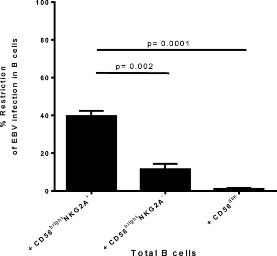 Differences in restriction of early EBV infection in B cells by autologous CD56brightNKG2A+ NK cells compared to other tonsillar NK subsets.