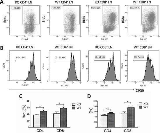 Hypoproliferation of miR34a-deficient T cells.