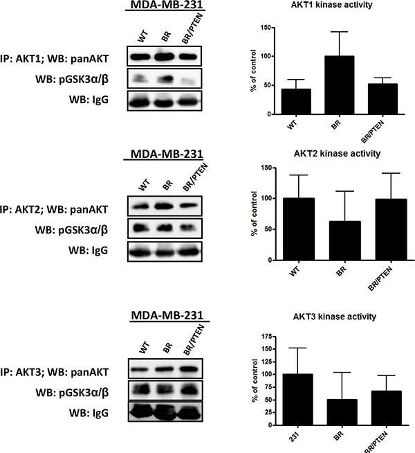 AKT isoform specific in vitro kinase assays.