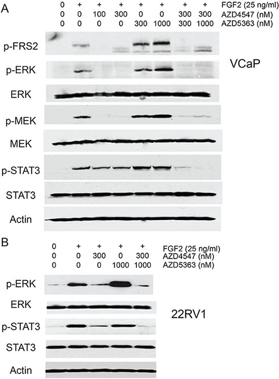 Impact of combination treatment on ERK and STAT3 signaling.