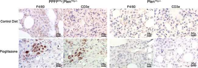 Immunohistochemical