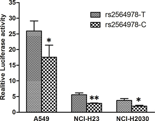 Effect of the CD55 rs2564978 polymorphism on the CD55 promoter activity.