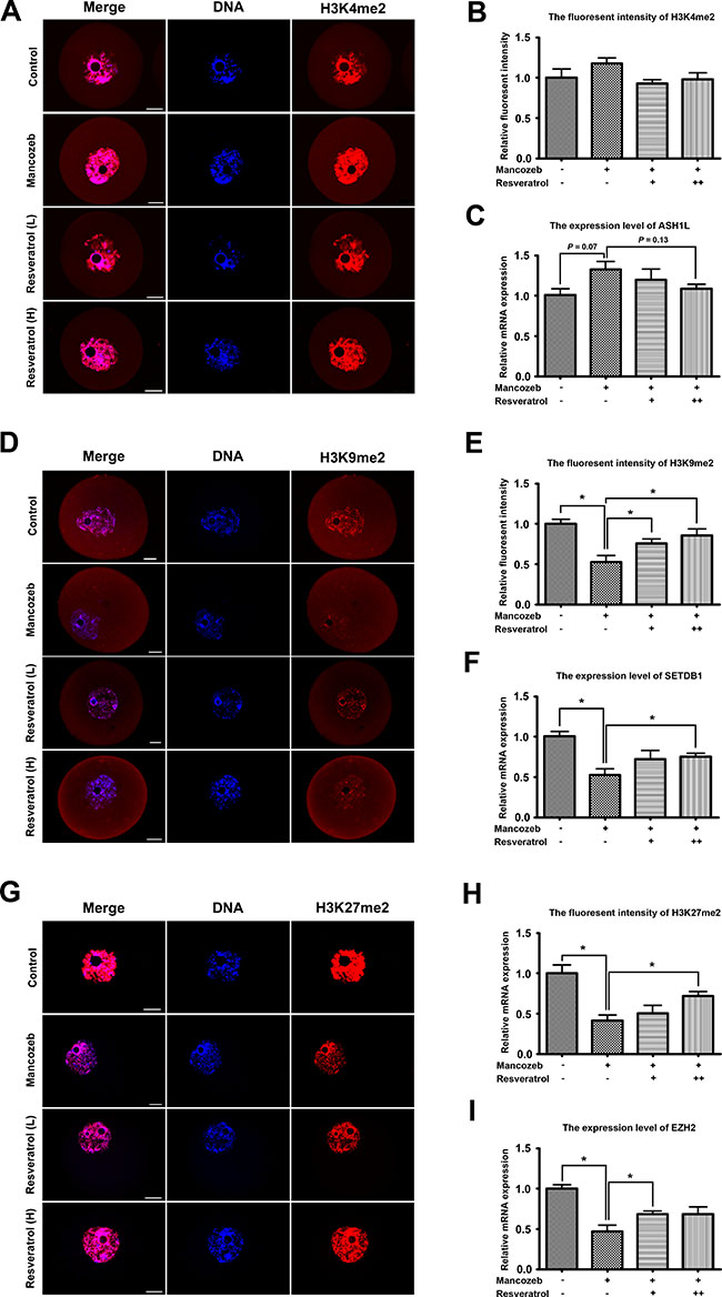 Resveratrol and mancozeb effected on H3K4me2, H3K9me2 and H3K27me3 levels in mouse oocytes.