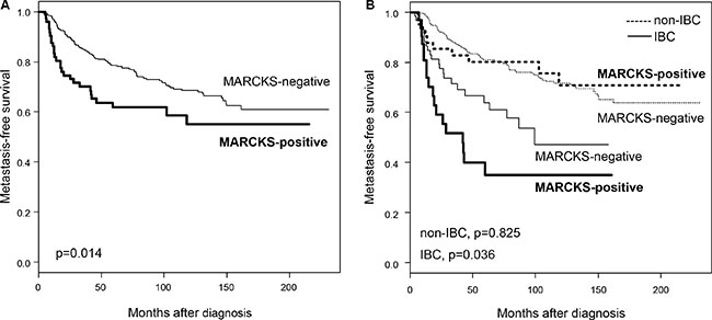 Metastasis-free survival according to MARCKS expression in the whole population and in IBC and non-IBC.