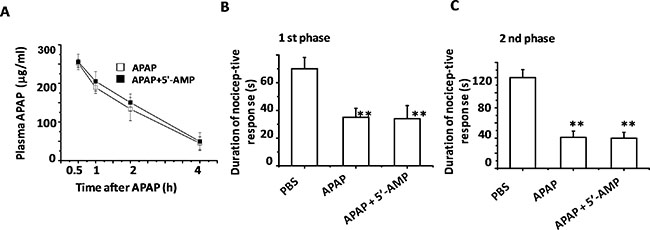 5′-AMP failed to influence APAP catabolism and analgesic.
