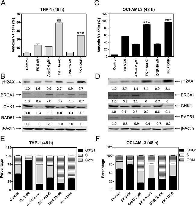 FK228 cooperates with ara-C or DNR in inducing apoptosis and abrogates S and/or G2/M cell cycle checkpoint activation induced by ara-C or DNR in THP-1 and OCI-AML3 AML cells.