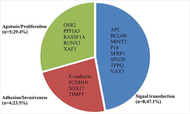 Summarized genetic alterations arranged by main gene function.