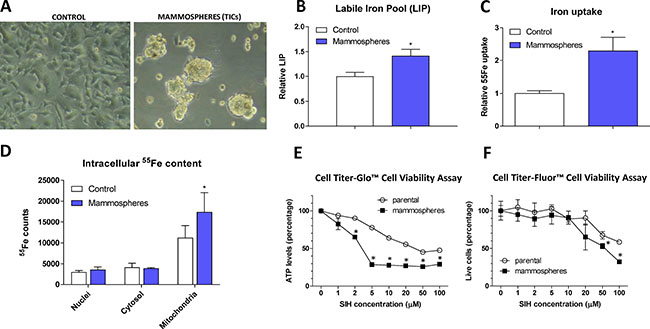 Appearance, labile iron pool, iron uptake, intracellular localization and sensitivity to chelators in tumor-initiating cells (TICs).