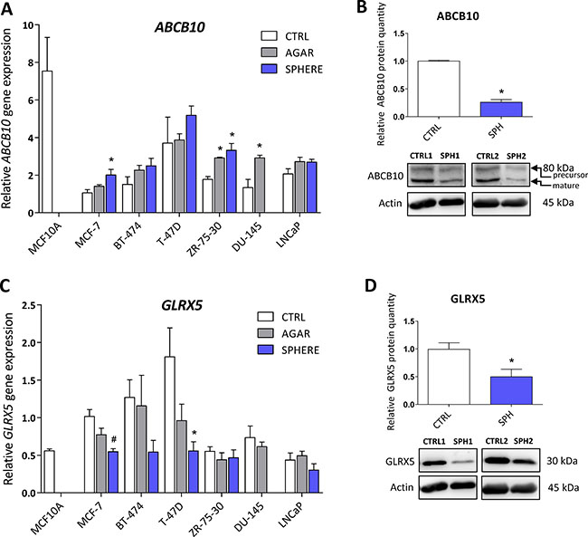 Protein levels of the ATP Binding Cassette Subfamily B Member 10 (ABCB10) and glutaredoxin 5 (GLRX5) participating in mitochondrial FeS cluster assembly are decreased in tumor-initiating cells (TICs).