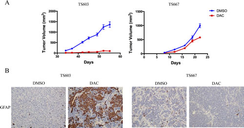 DAC suppresses growth and promotes differentiation of IDH mutant glioma cells.