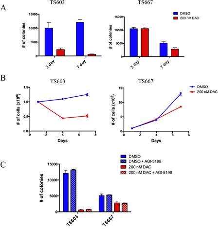 Low dose decitabine impairs growth potential