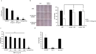 CD82 ensures TIMP-1 inhibition of PANC-1 cell migration.