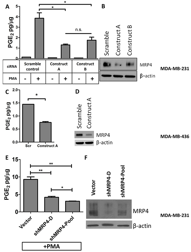 Knockdown of MRP4 in MDA-MB-231 and MDA-MB-436 cells suppresses the export of PGE2.
