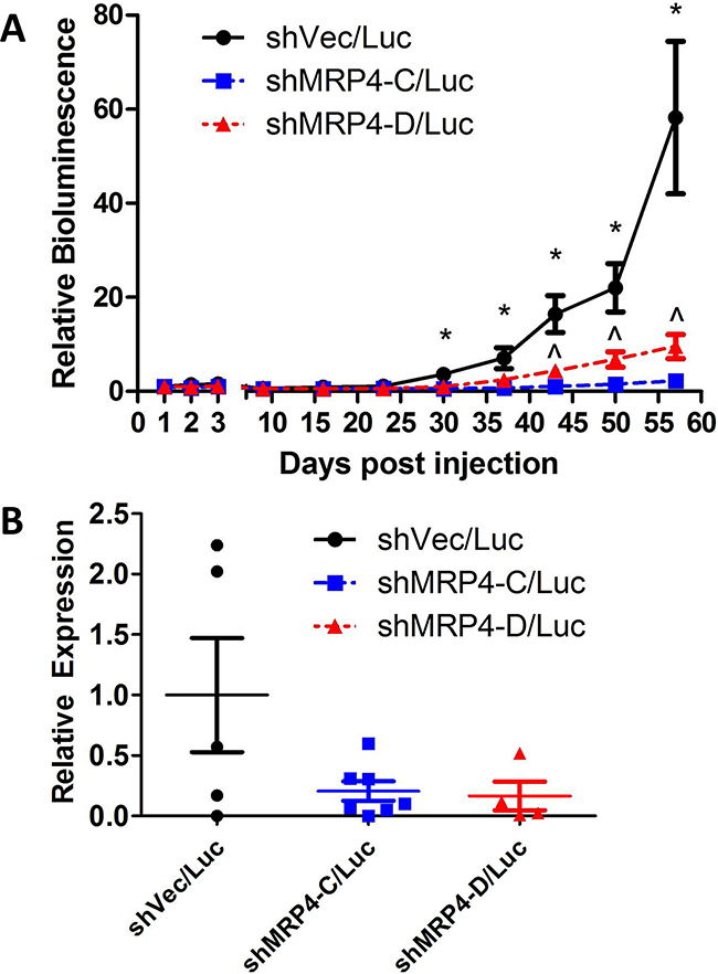Suppressed expression of MRP4 decreased metastatic load in mice bearing subcutaneous MDA-MB-231 shMRP4/Luc tumors.