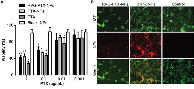 Toxicity of RVG-PTX-NPs.