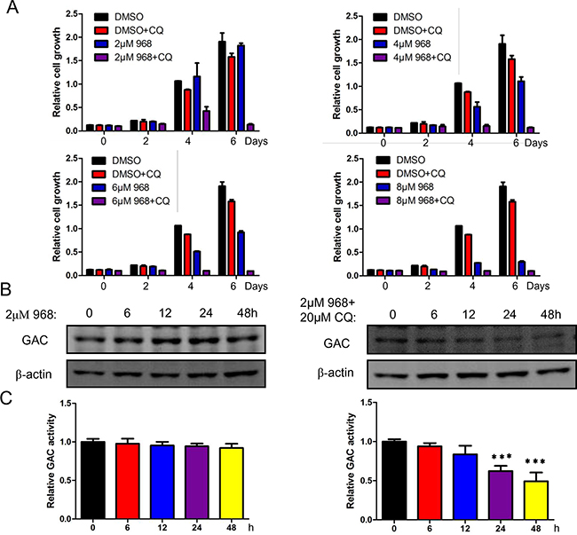 Autophagy inhibition promotes 968 induced cell death.