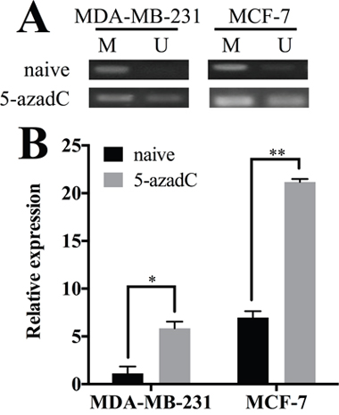 Hypermethylation of HOXA11 controls its expression in breast cancer.